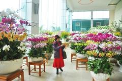 Phong lan nhập ngoại hơn 60 triệu vẫn hút khách Hà Nội