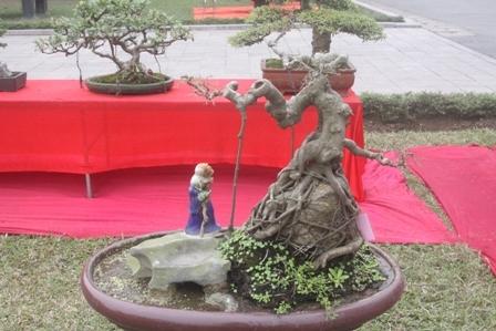 Đi ngắm cây thế 'gợi cảm' ở Hà Nội