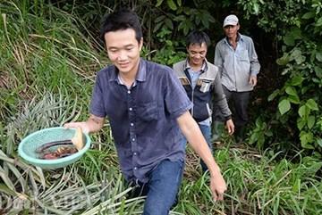 6 triệu đồng 1kg nấm lim chữa 'bách bệnh'