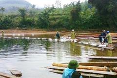 """Phát hiện hàng trăm bè gỗ """"vô chủ"""" trôi sông trong rừng sâu"""