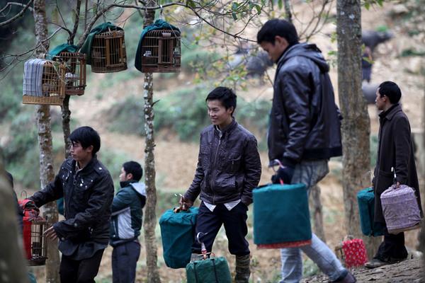 Chợ chim họa mi đặc biệt giữa núi rừng