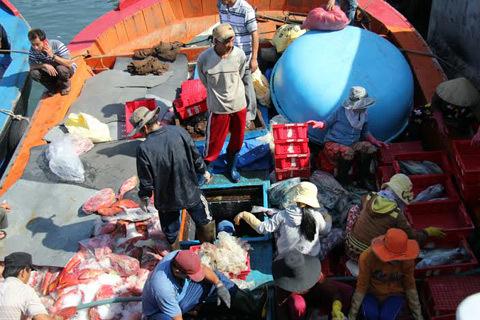 Tàu cá từ Hoàng Sa rộn ràng cập cảng Lý Sơn