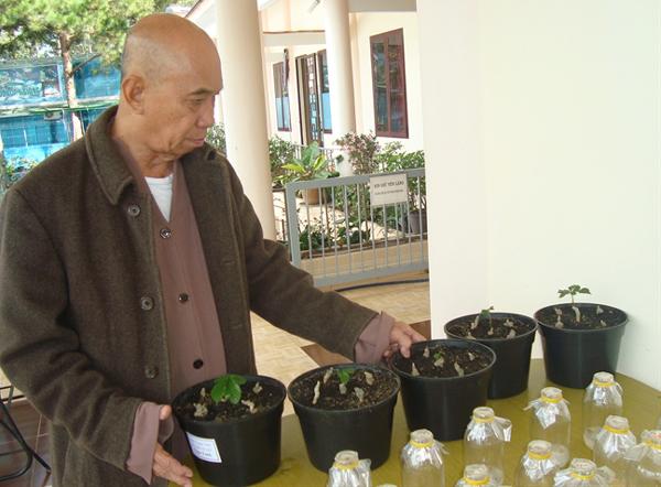 Bí quyết trồng sâm Ngọc Linh của nhà sư Đà Lạt