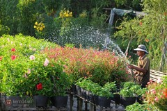 Mê mẩn ngắm những vườn hoa đẹp rực rỡ ở vựa hoa lớn nhất miền Nam