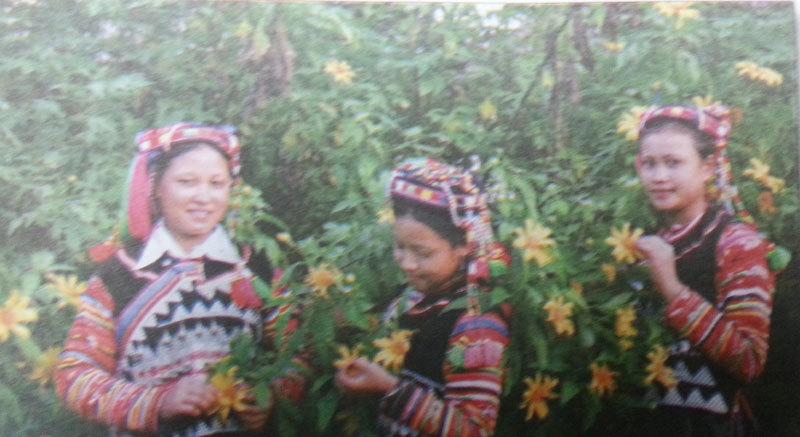 A Pa Chải mùa hoa cúc quỳ