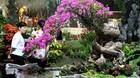 Hoa kiểng hàng trăm năm tuổi giá bạc tỷ đổ bộ Sài Gòn