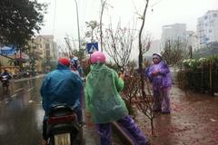 Hà Nội: Đào, quất ủ rũ… đội mưa đợi khách