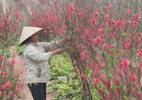 Tết Ất Mùi nên chưng hoa gì để rước tài lộc và may mắn?
