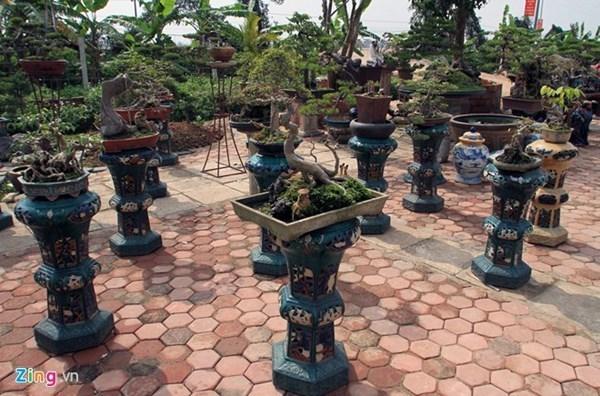 Cây xanh song thụ giá 2 tỷ ở Hà Nội