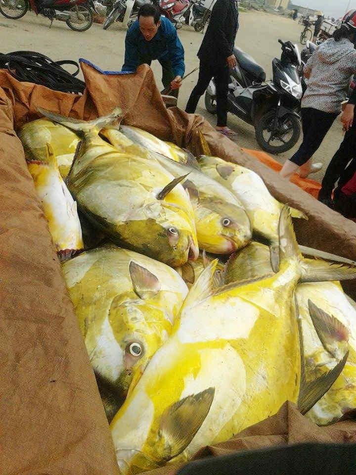 Ngư dân hớn hở trúng đậm 'lộc biển', kiếm hàng trăm triệu
