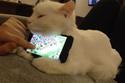 Con mèo đỡ smartphone cho chủ chơi game