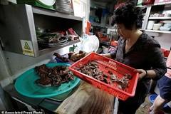 Vô địch ăn thịt chó: Hàn Quốc 2 triệu con, Việt Nam 5 triệu con