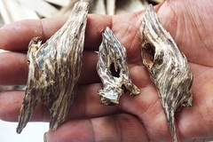 Ly kỳ trầm hương Khánh Hòa: 10 tỷ/kg
