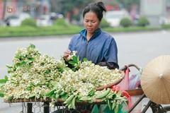 Hương hoa bưởi nồng nàn khắp phố Hà Nội