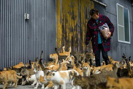 Hòn đảo kỳ lạ nơi mèo nhiều hơn người