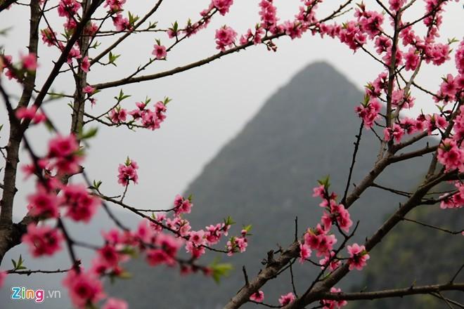 Sắc hoa xuân rực rỡ khắp Tây Bắc
