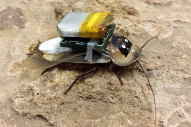 Chế tạo 'robot gián' chuyên cứu sinh thảm họa
