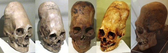 Hộp sọ bí ẩn Paracas không phải ADN của người - 2