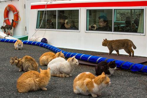 đảo mèo, Nhật Bản