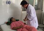 TPHCM: Cả nhà ngộ độc vì ăn nhộng ve sầu
