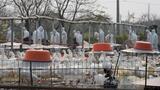Virus H7N9 có thể phát triển thành đại dịch ở người