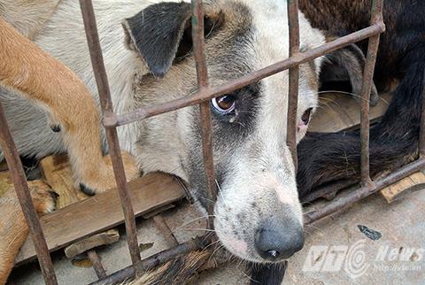 'Công nghiệp' thịt chó: Ám ảnh hành trình bắt và giết