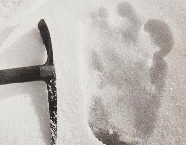 Bí ẩn về Người tuyết Yeti ngày càng kỳ bí