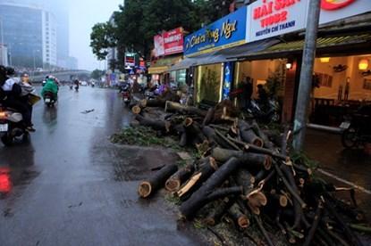 chặt hạ, cây xanh, Phan Đăng Long