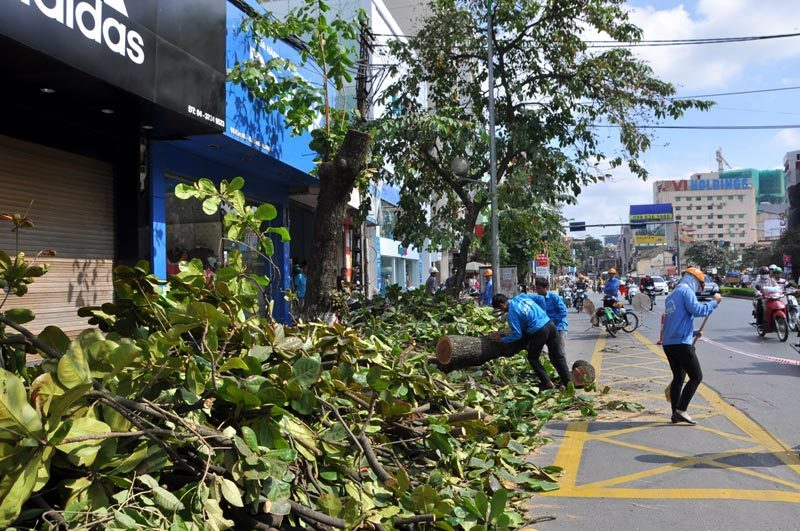 chặt cây, Hà Nội, đường phố...