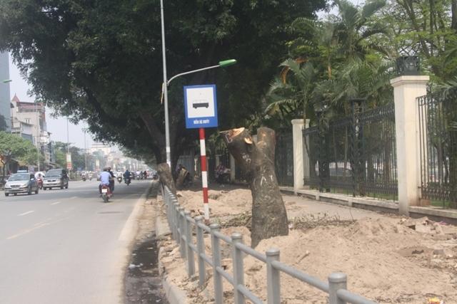 Hà Nội đã chặt hạ xong cây trên một số đường