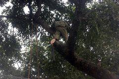 Clip: Hàng loạt cổ thụ bị đốn hạ trên đường Nguyễn Chí Thanh