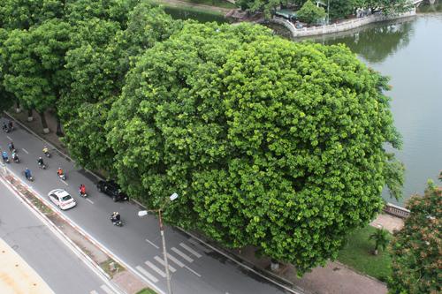 Hà Nội còn lại gì sau những hàng cây bị hạ?