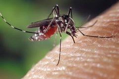 Tại sao một số người hay bị muỗi đốt hơn?