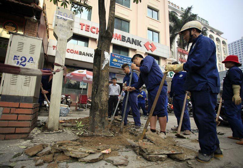 Hà Nội yêu cầu công khai việc chặt cây