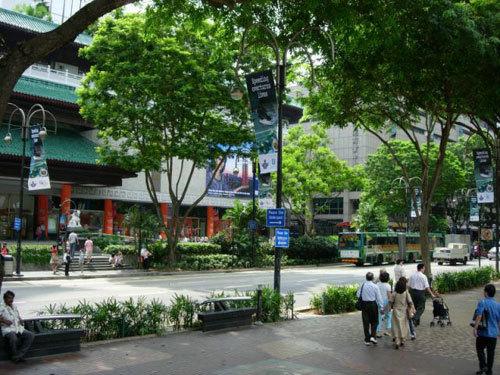Singapore: Chặt 3 cây bị phạt 6.000 USD