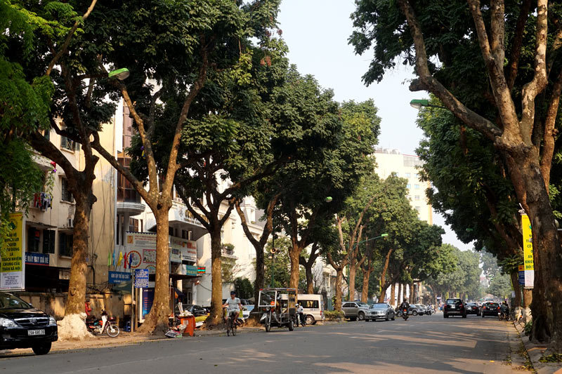 Sở Xây dựng HN: 'Hầu hết dân đồng thuận việc chặt cây'!
