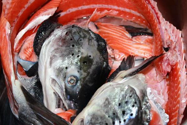 xương-cá-hồi, cá-hồi, Nauy, chế-biến, nấu-cháo, ruốc, omga-3, bộ-xương, cá-hồi-fillet