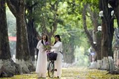 Cây xanh Hà Nội: Em đi bỏ lại con đường