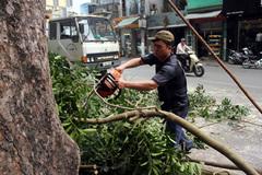 """Chủ tịch HN: Không có chuyện """"kiếm chác"""" từ việc chặt 6.700 cây"""