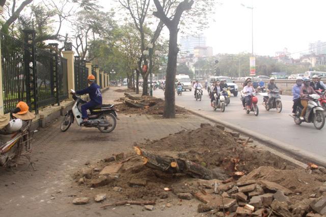Vụ chặt cây: Chủ tịch HN gửi thư cho ông Trần Đăng Tuấn