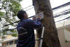 """Thời sự trong ngày: """"Không có chuyện kiếm chác từ chặt cây'"""