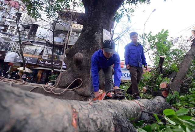 Hà Nội dừng chặt cây, yêu cầu Sở Xây dựng kiểm điểm