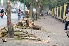 Bao nhiêu cây bị đốn vì sự xa xỉ của chúng ta?