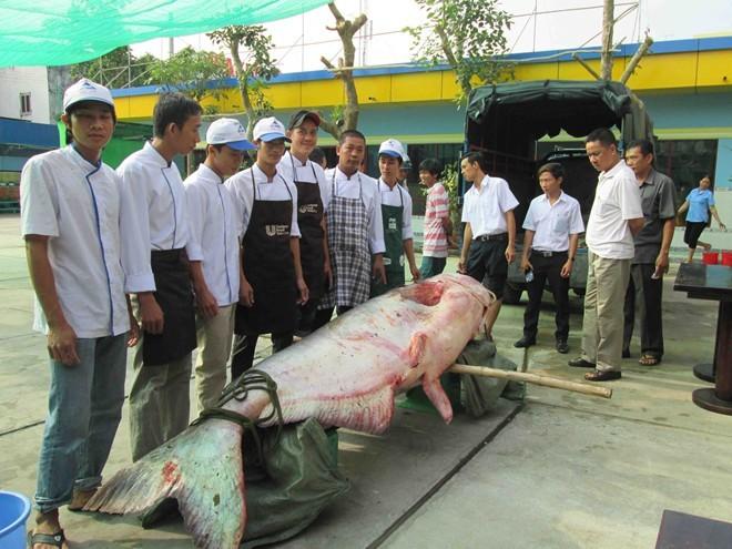 Thủy quái Mekong trong nồi lẩu trăm triệu đại gia Sài Gòn