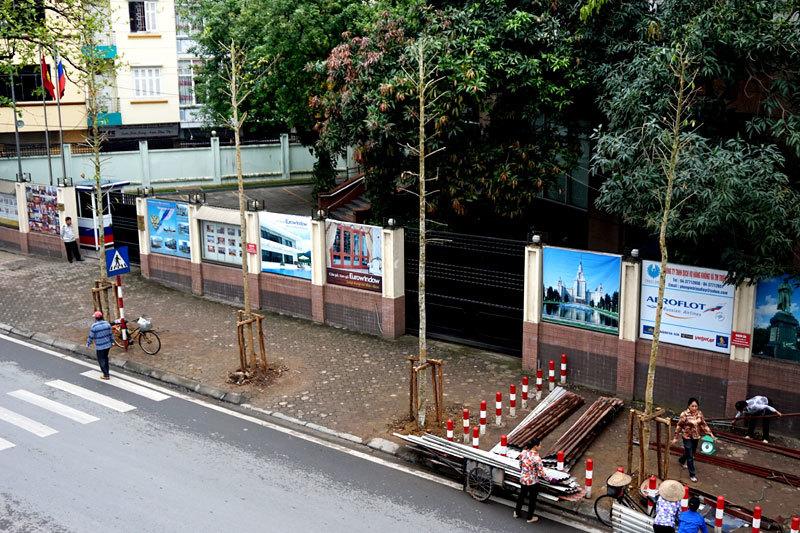 Hàng cây mới vừa được thay thế trên phố Hà Nội