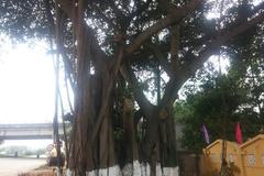 Người thầy tự nguyện trồng cây cho khu dân cư