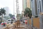 Đường phố Thủ đô không hợp trồng cây vàng tâm?