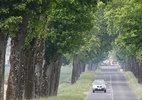 Hơn 10.000 người Pháp ký đơn yêu cầu không chặt cây