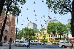 Chuyện về đàn chim bồ câu nổi tiếng ở nhà thờ Đức Bà Sài Gòn