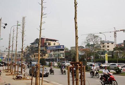 Vụ chặt cây: Đình chỉ hàng loạt cán bộ